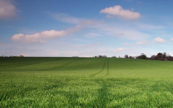 Бесплатные фото поле,зеленое,следы,деревья,небо,облака