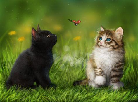 Фото бесплатно животные, трава, котята