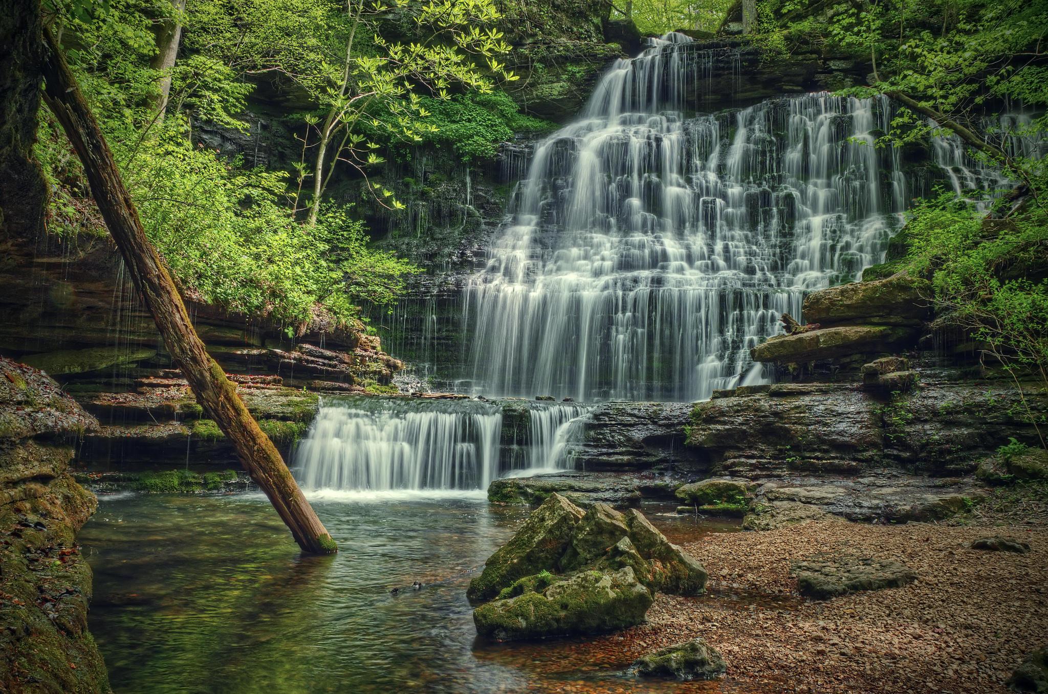 обои лес, деревья, речка, водопад картинки фото