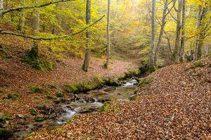 Бесплатные фото осень,лес,деревья,речка,пейзаж