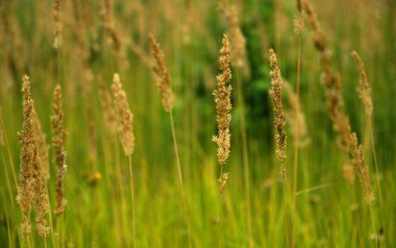 Фото бесплатно поле, трава, зелень, степь
