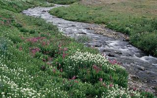 Бесплатные фото ручей,течение,камни,поляна,трава,цветы