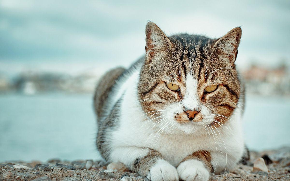 Фото бесплатно старый кот, берег, причал, отдых, кошки