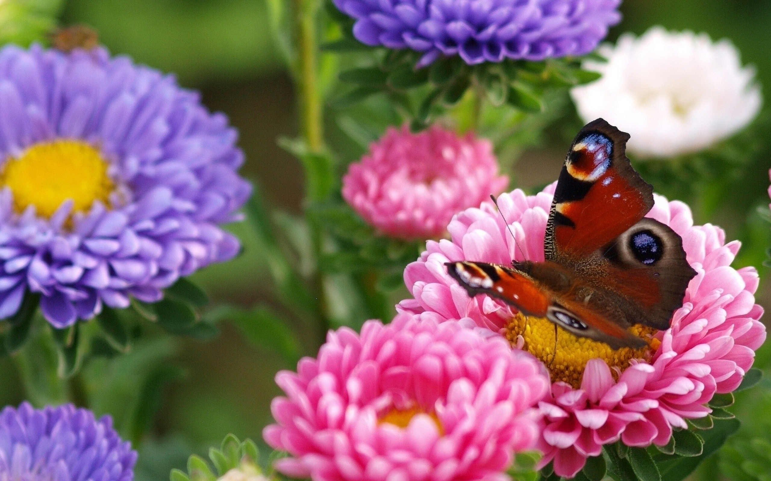 Фото бабочек и цветов в хорошем качестве