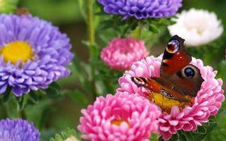 Бесплатные фото цветы, трава, поле, бабочка, пыльца