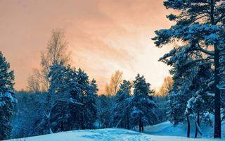 Фото бесплатно зимний лес, сугробы, вечер