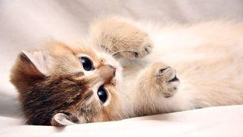 Бесплатные фото котенок,морда,глаза черные,лапы,шерсть