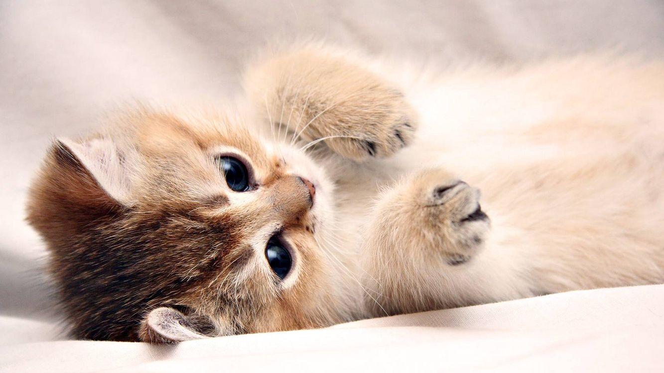 Фото бесплатно котенок, морда, глаза черные - на рабочий стол