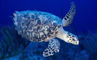 Фото бесплатно море, дно, кораллы, черепаха, панцирь, ласты