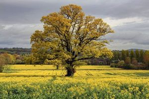 Бесплатные фото поле, дерево, цветы, пейзаж