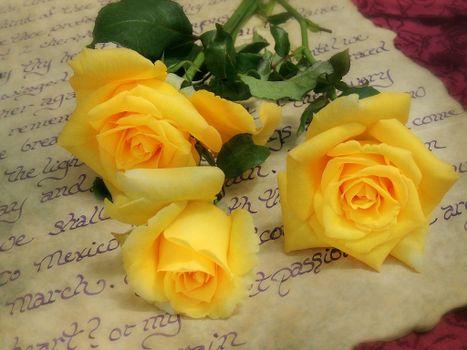 Фото бесплатно цветы, розы, письмо