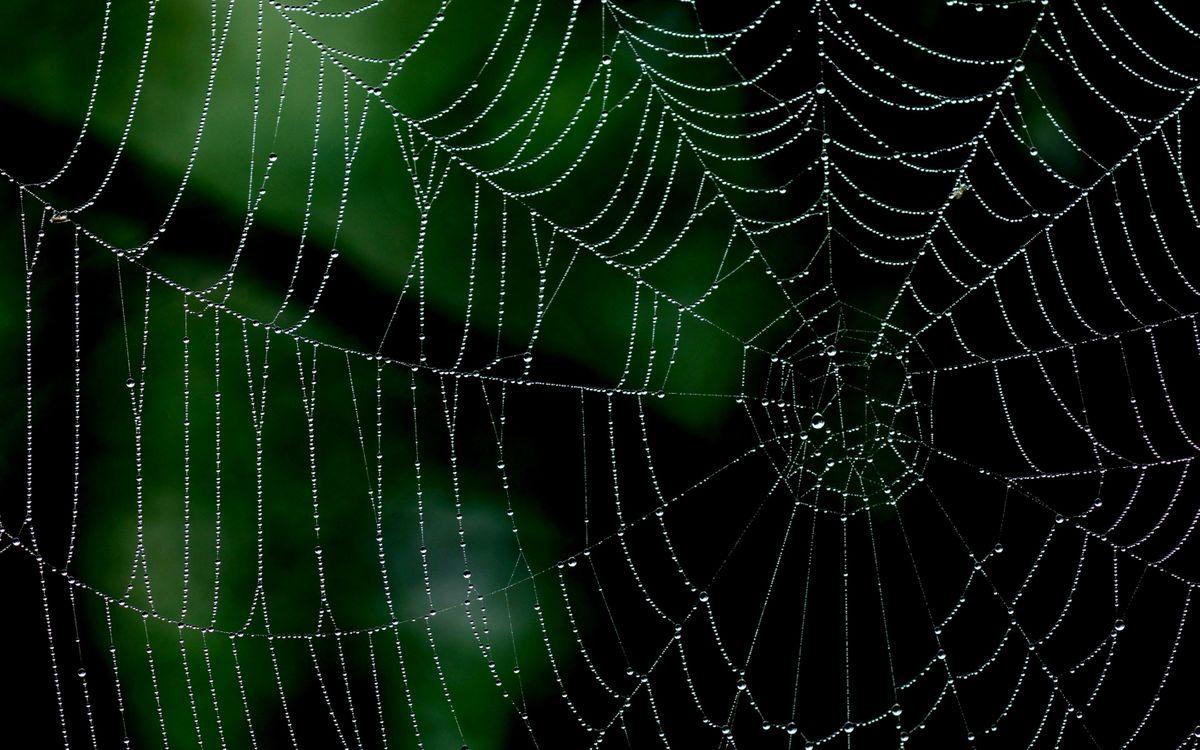 Фото бесплатно паутина, после дождя, капли, макро