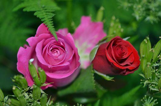 Посмотреть фото цветы, розы