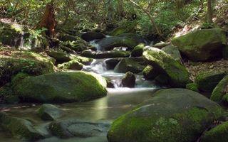 Бесплатные фото ручей,вода,течение,камни,мох,растительность