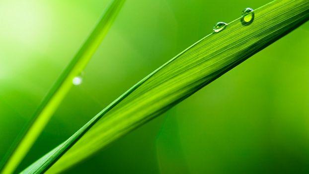 Photo free grass, race, drops