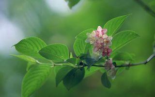 Бесплатные фото ветка,листья,зеленые,цветы,дерево,цветет
