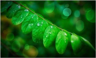 Заставки растение,ветка,листья,капли,макро