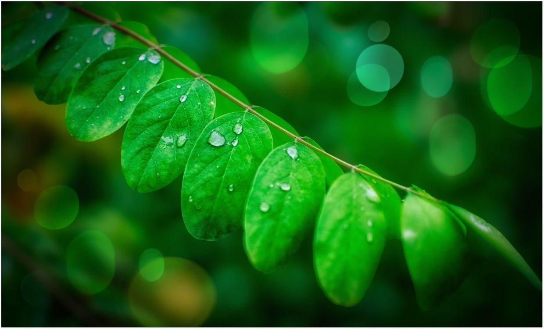 Фото бесплатно растение, ветка, листья, капли, макро, макро