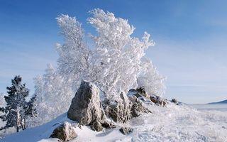 Заставки зима, мороз, деревья