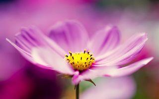 Photo free beautiful, pink, flower