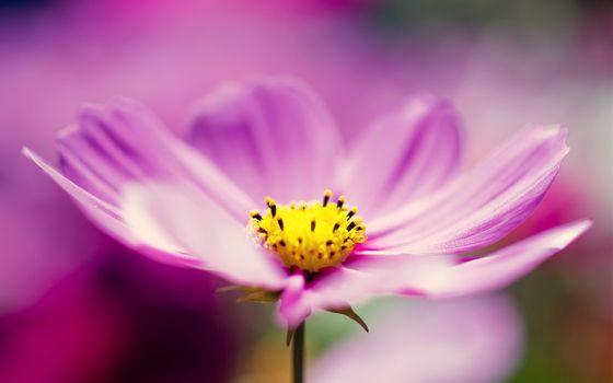 Фото бесплатно красивый, розовый, цветок