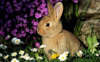 Заставки кролик, морда, уши, шерсть, трава, цветы