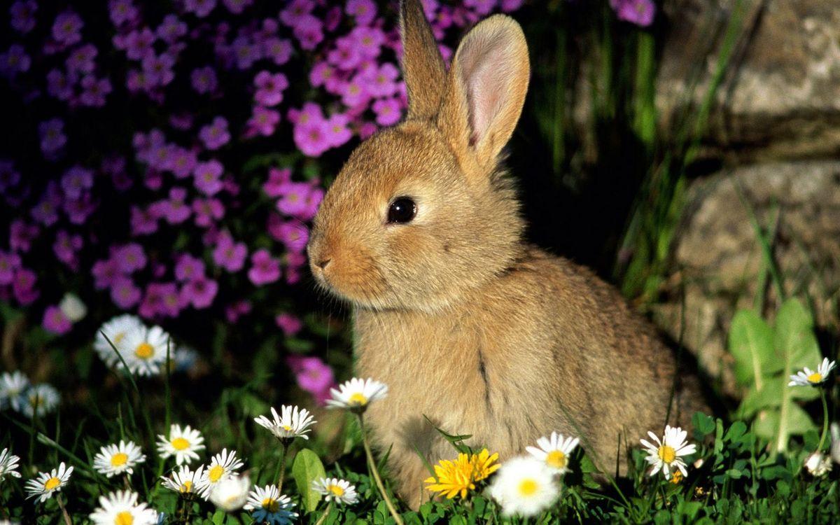 Фото бесплатно кролик, морда, уши, шерсть, трава, цветы, животные