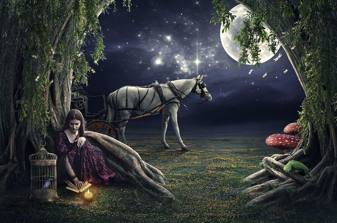 Фото бесплатно ночь, девушка, свеча, клетка, лошадь, луна, звёзды, попугай, птица, дерево, книга, грибы, стрекоза, романтика, рендеринг