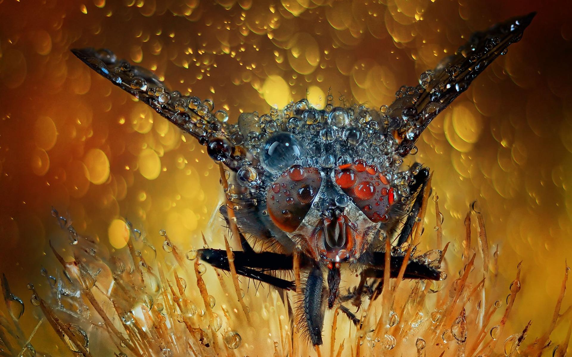 обои муха, глаза, крылья, полет картинки фото