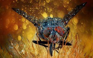 Бесплатные фото муха,глаза,крылья,полет
