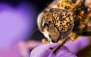Фото бесплатно муха, голова, глаза