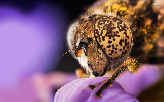 Бесплатные фото муха,голова,глаза,лапы,цветок,пыльца