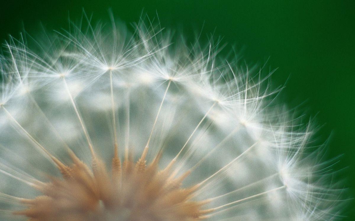 Фото бесплатно цветок, природа, семена - на рабочий стол