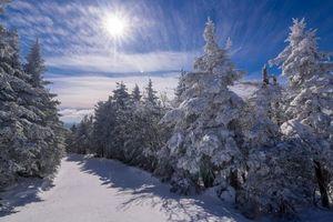 Бесплатные фото зима,сугробы,снег,лес,деревья,пейзаж
