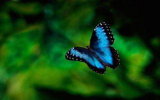 Бесплатные фото бабочка,синяя,усики,крылья,узор,полет