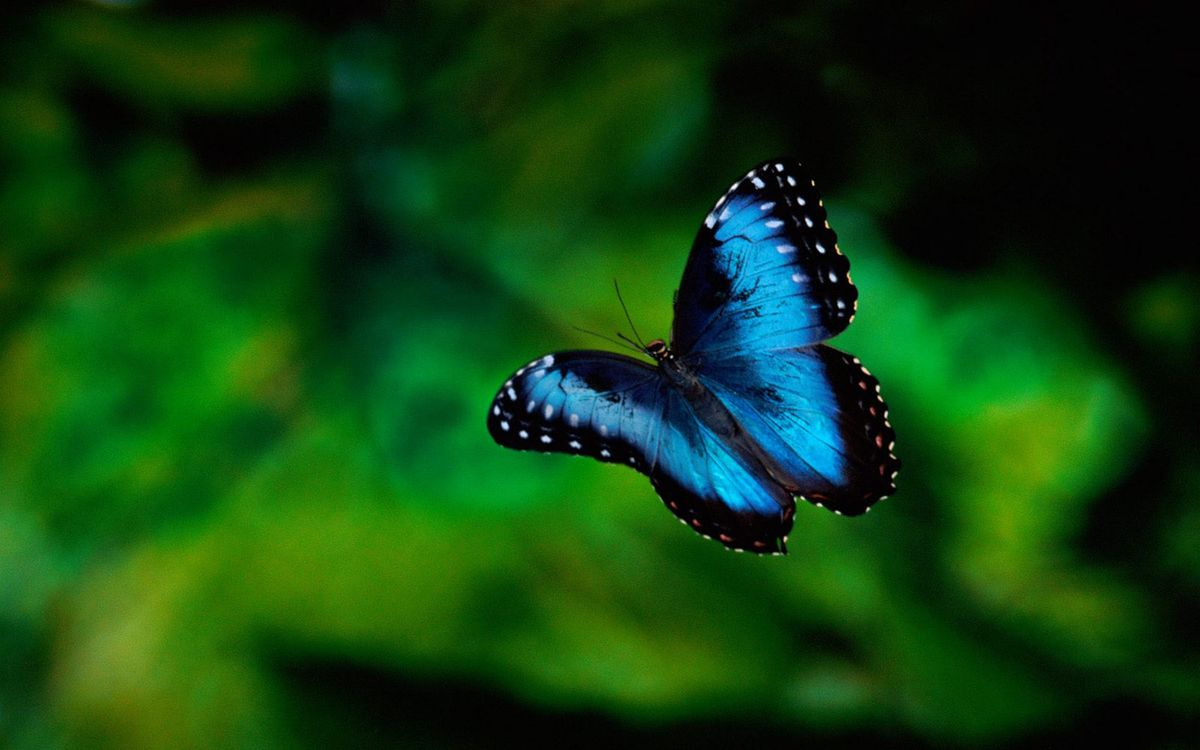 Photos for free butterfly, blue, antennae - to the desktop
