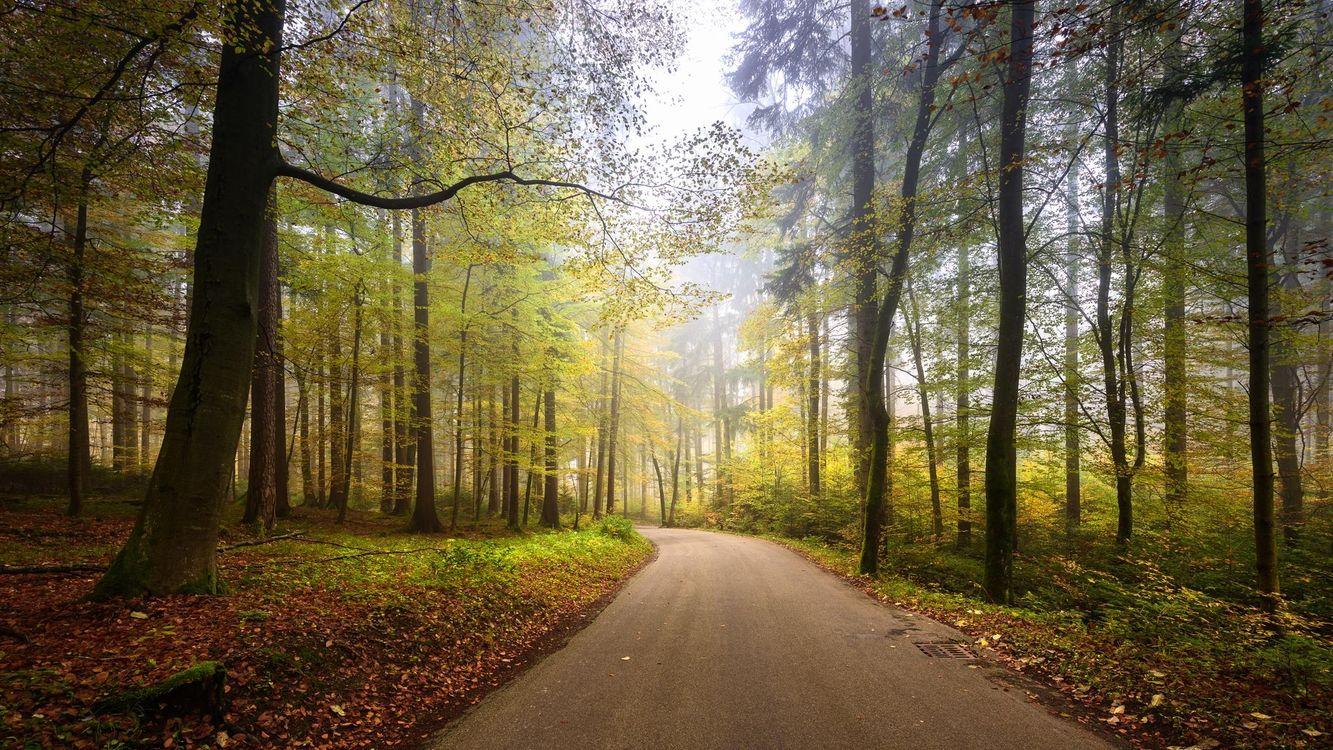 Фото бесплатно осень, Zumikon, Switzerland, дорога, деревья, пейзаж, пейзажи