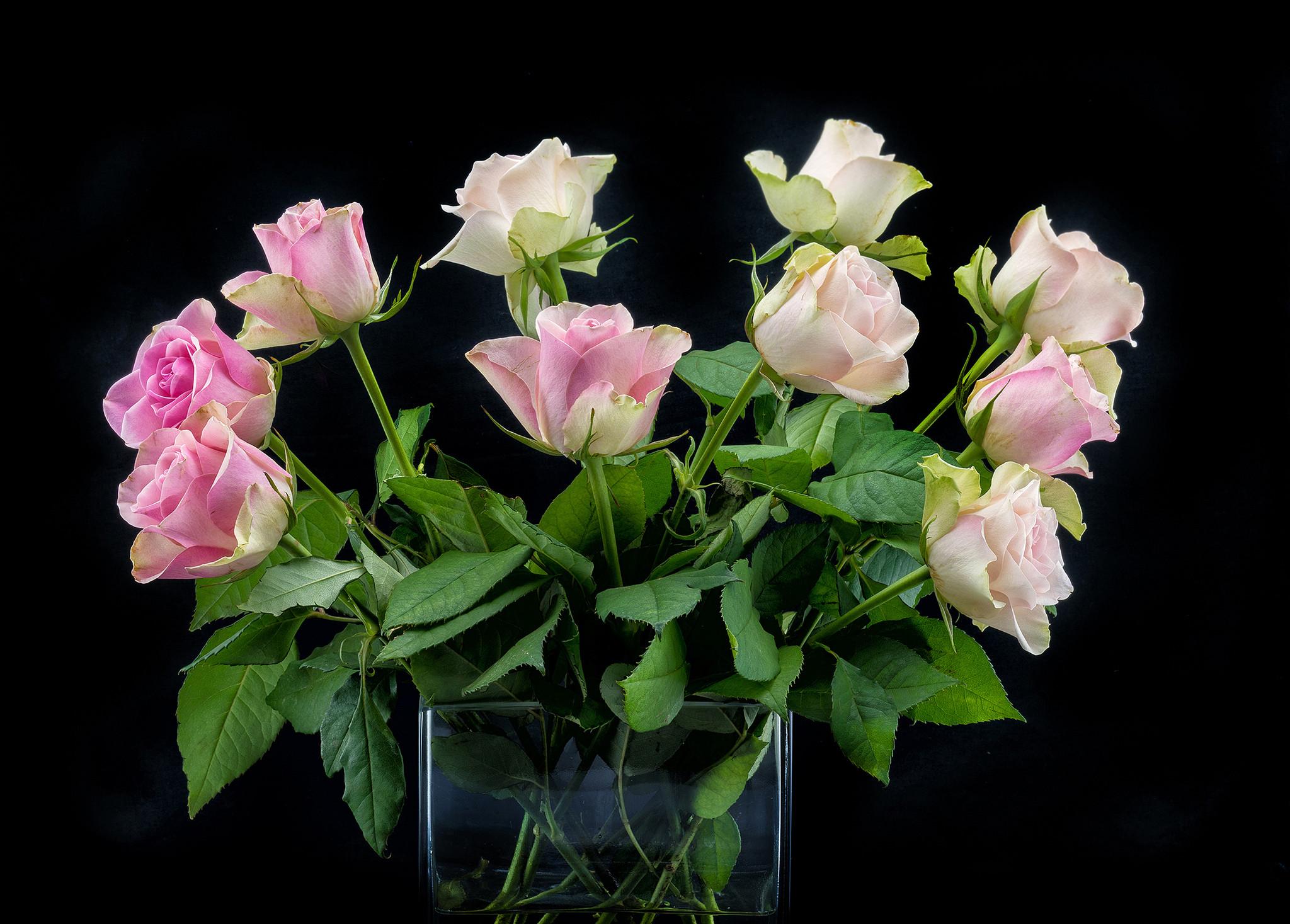 обои роза, розы, цветы, букет картинки фото