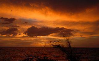 Фото бесплатно вечер, берег, кустарник