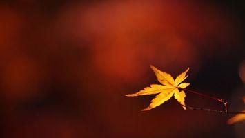 Обои ветка, лист, желтый, прожилки, фон, бордовый