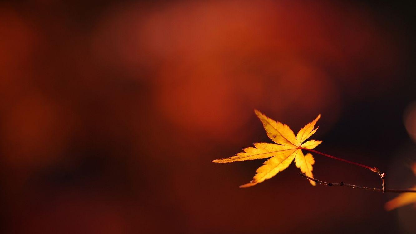 Фото бесплатно ветка, лист, желтый, прожилки, фон, бордовый, макро