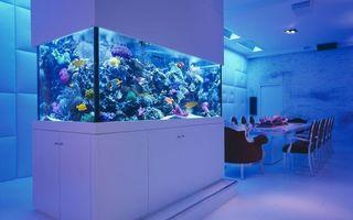 Бесплатные фото комната,аквариум,рыбы,подсветка,стол,стулья