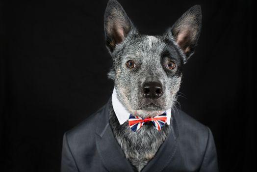 Фото бесплатно Mr Rupert, собака, костюм