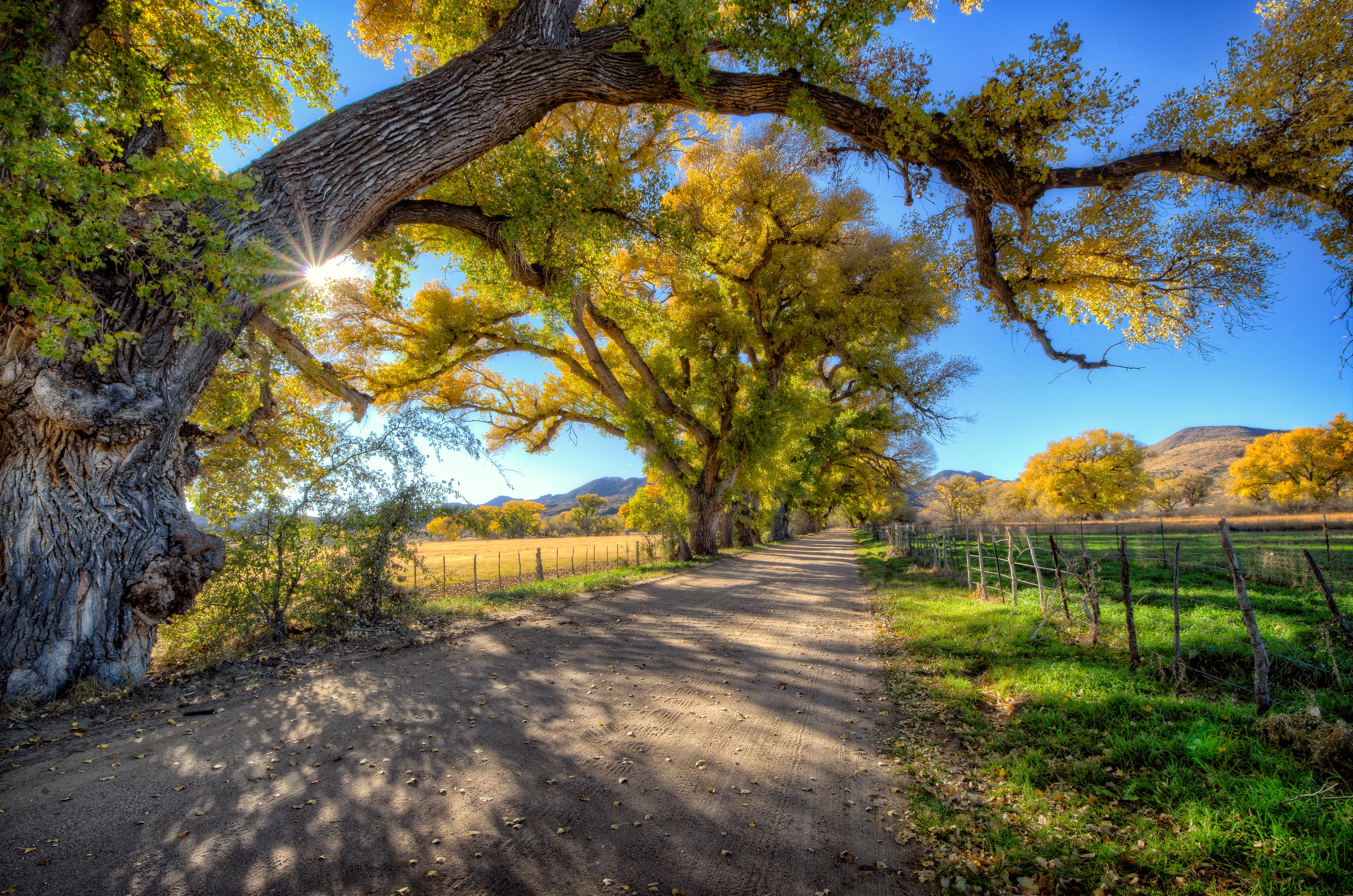 Обои осень, поле, дорога, деревья