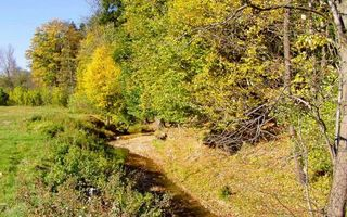 Фото бесплатно речушка, трава, зеленая, деревья, листва, ветви, небо