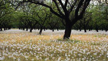 Фото бесплатно поляна, трава, одуванчики, деревья, ветви, листва