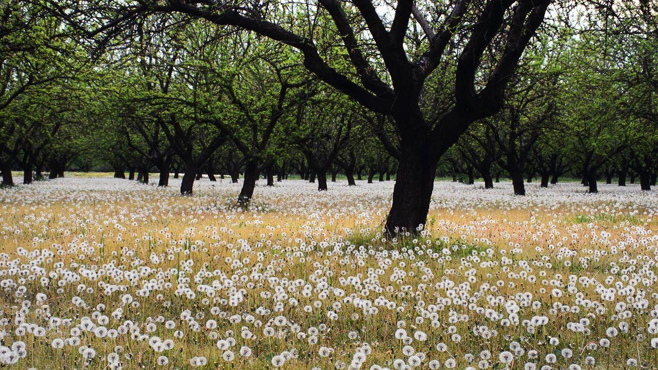 Фото бесплатно ветви, поляна, трава - на рабочий стол
