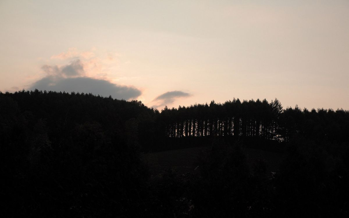 Фото бесплатно вечер, гора, лес - на рабочий стол