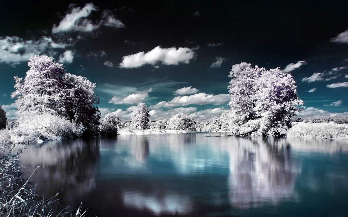 Фото бесплатно деревья, иней, озеро - на рабочий стол