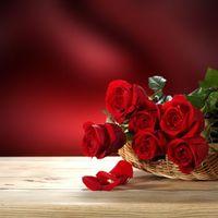 Фото бесплатно флора, розы, красивые цветы